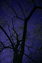 *leuchtender Baum*