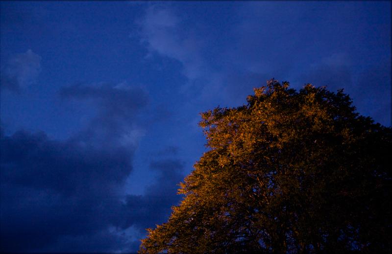 Leuchtender Baum zu Blauer Stunde