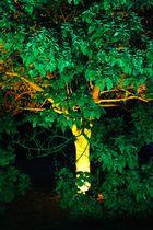 Leuchtender Baum_1
