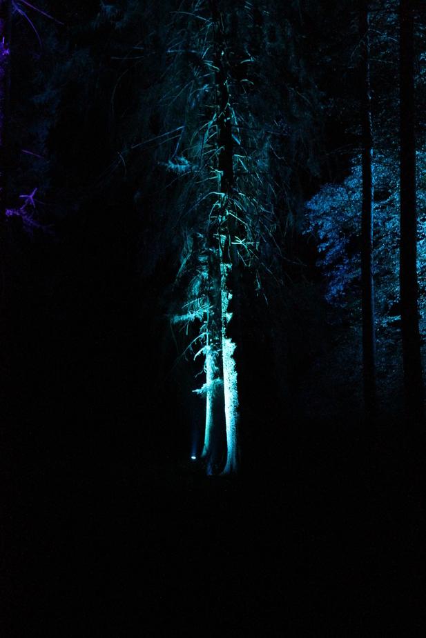 Leuchtender Baum_3