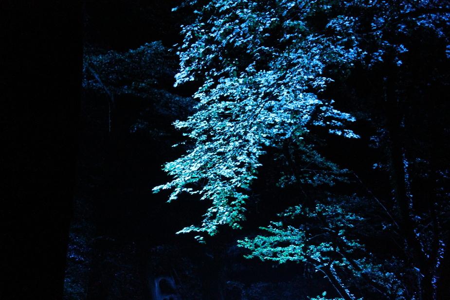 Leuchtender Baum_4
