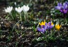 Leuchtender Frühling