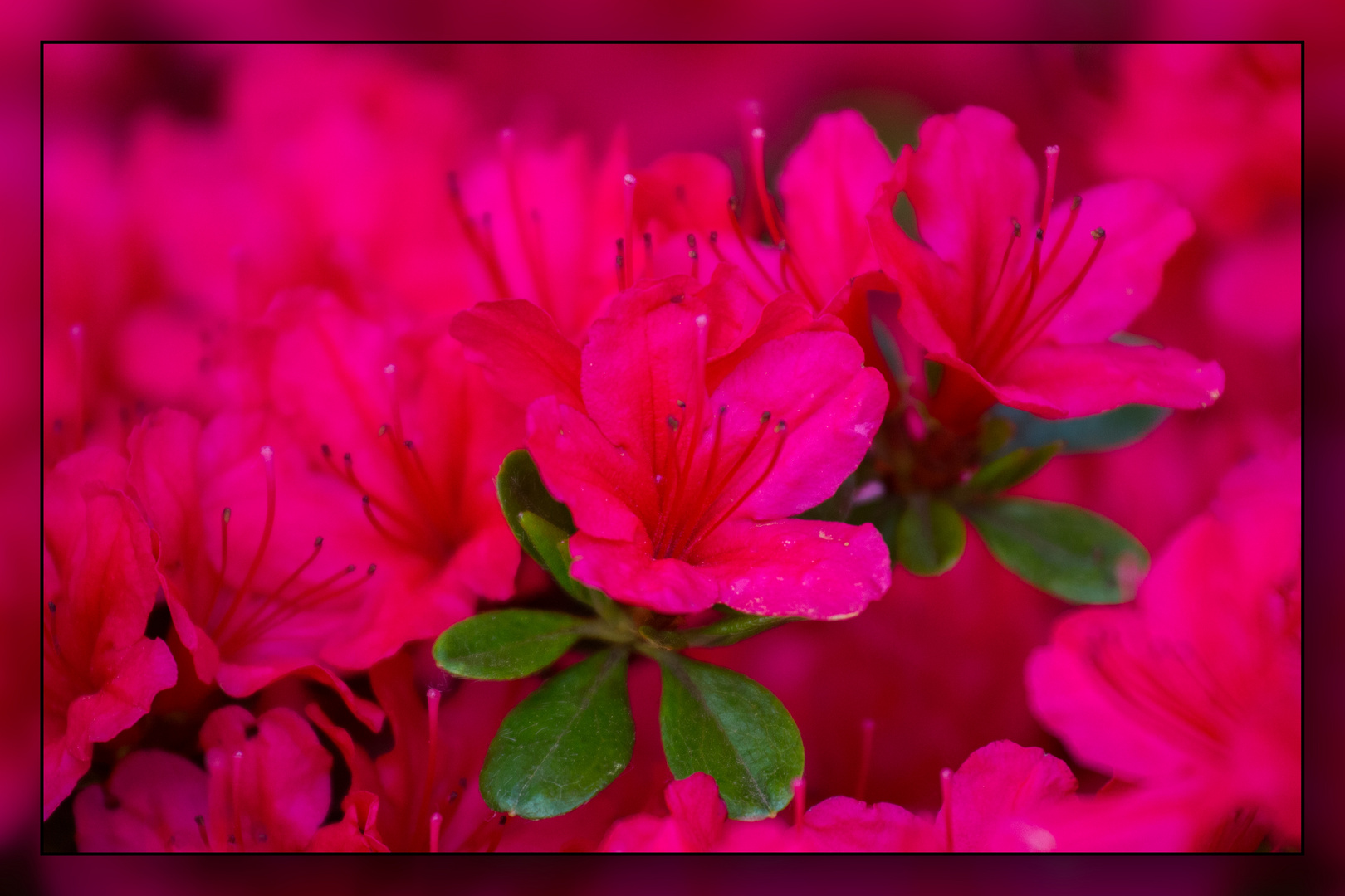 Leuchtender Frühling in Soeldorf