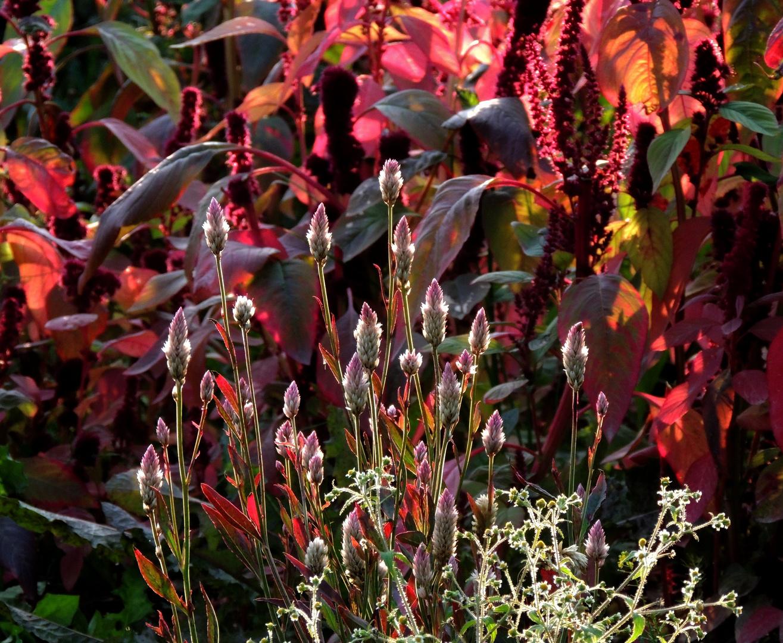 Leuchtender Herbstblumenwald