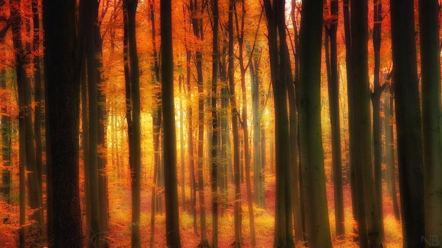 Leuchtender Herbstlicher Wald