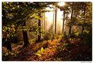 Leuchtender Herbstwald von Angies Fotowelt