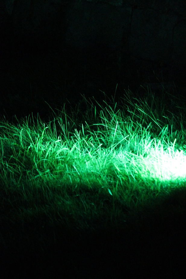 Leuchtender Rasen