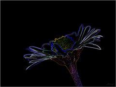 Leuchtendes Gänseblümchen