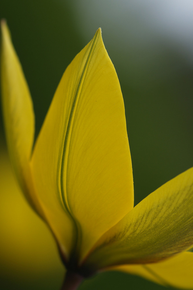 Leuchtendes Gelb