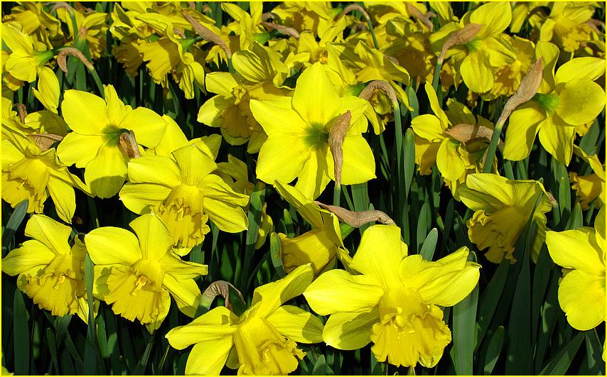 Leuchtendes gelb.