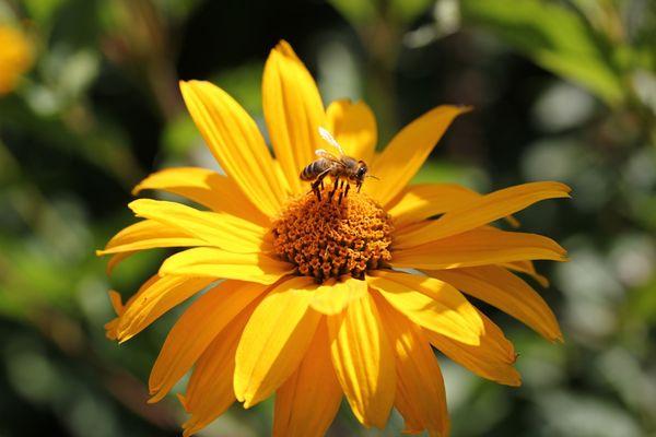 Leuchtendes Gelb-Orange