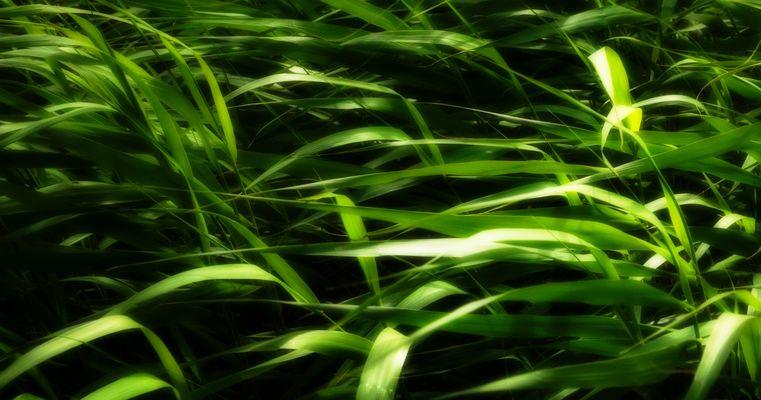 leuchtendes Gras