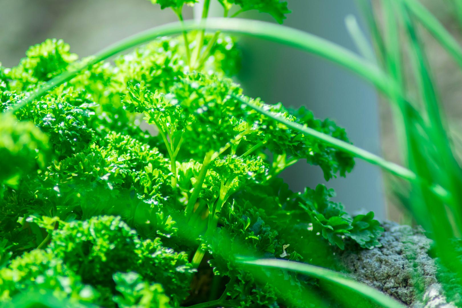 Leuchtendes Grün 2