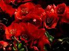 leuchtendes Rot