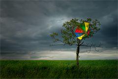 « leuchtschirm »