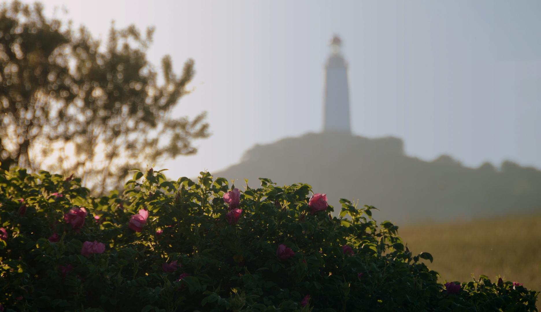 Leuchtturm Dornbusch 2013