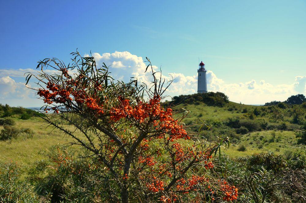Leuchtturm mit Sanddornbusch