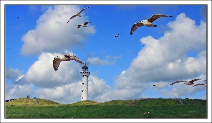 Leuchtturm und Möwen.....Egmond aan Zee (NL)