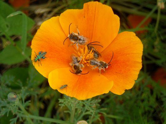 l'europe des insectes