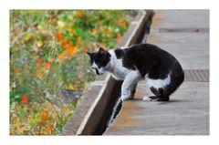 Levada Katze