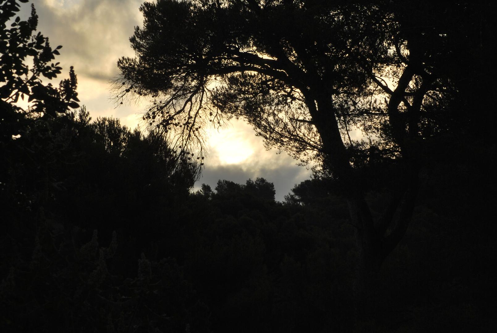 Levée du jour sur les collines de Marseille