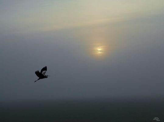 Lever dans la brume