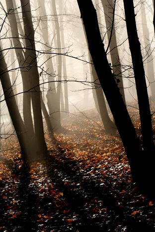 Lever de brouillard