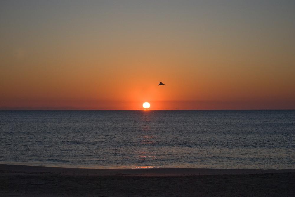 lever de soleil camarguais
