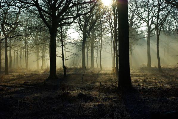 lever de soleil en foret