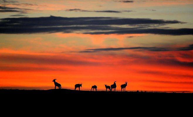 Lever de Soleil en présence des Topis sur le Mara