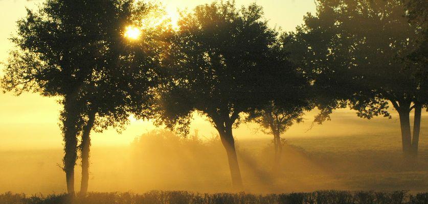 Lever de soleil - Forêt de CHAMBORD -