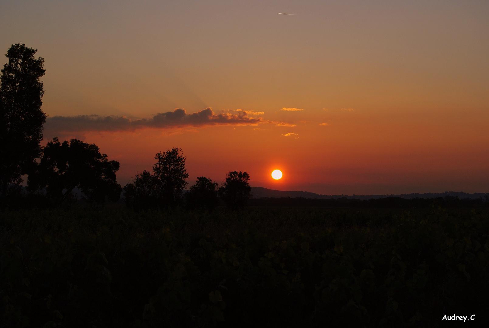 Lever du soleil dans les vignes de Salles d'Aude (11)