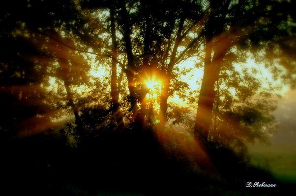 lever du soleil entre les arbres