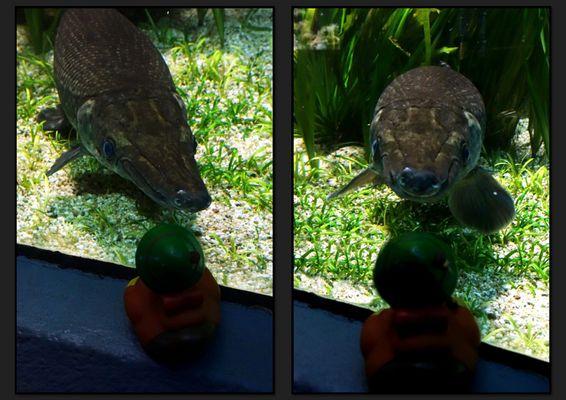 """Lewi und das """"Krokodil"""""""