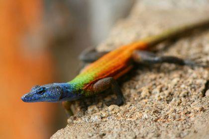 Reptiles, amphibiens