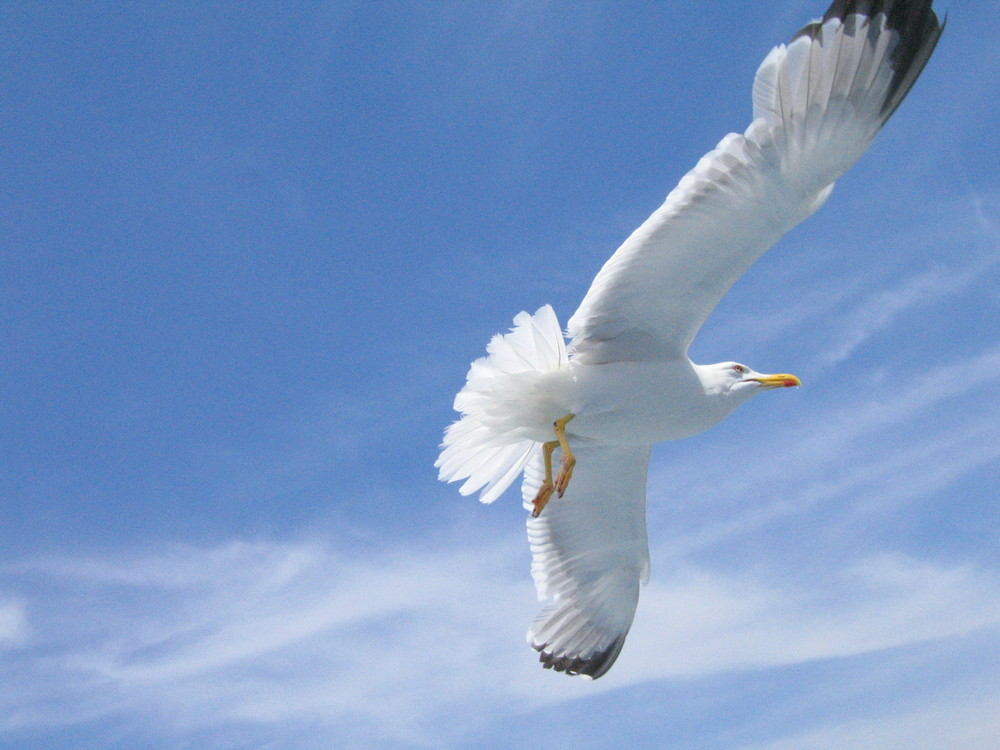 Lezione di volo naturale