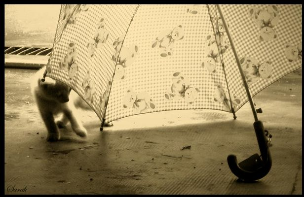 L'histoire de Bibi, le petit chat
