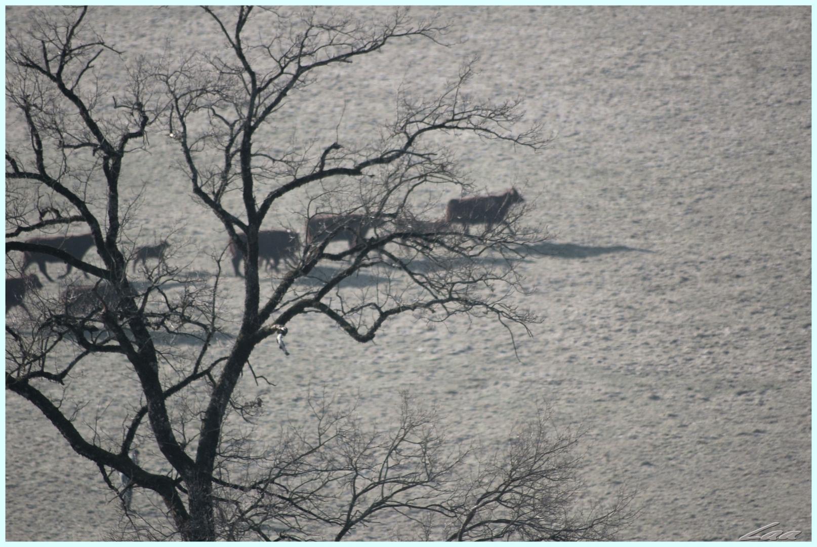 L'hiver dans les prairies