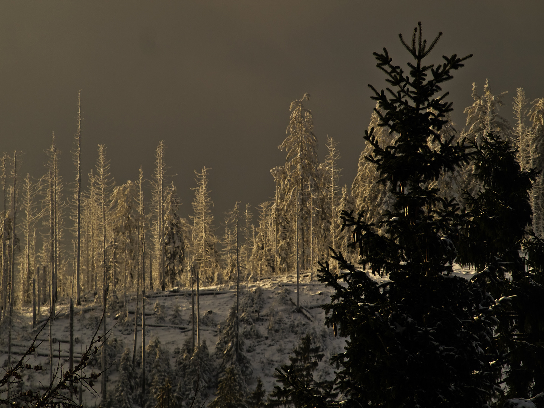 l'hiver en Forêt-Noire - Winter im Schwarzwald