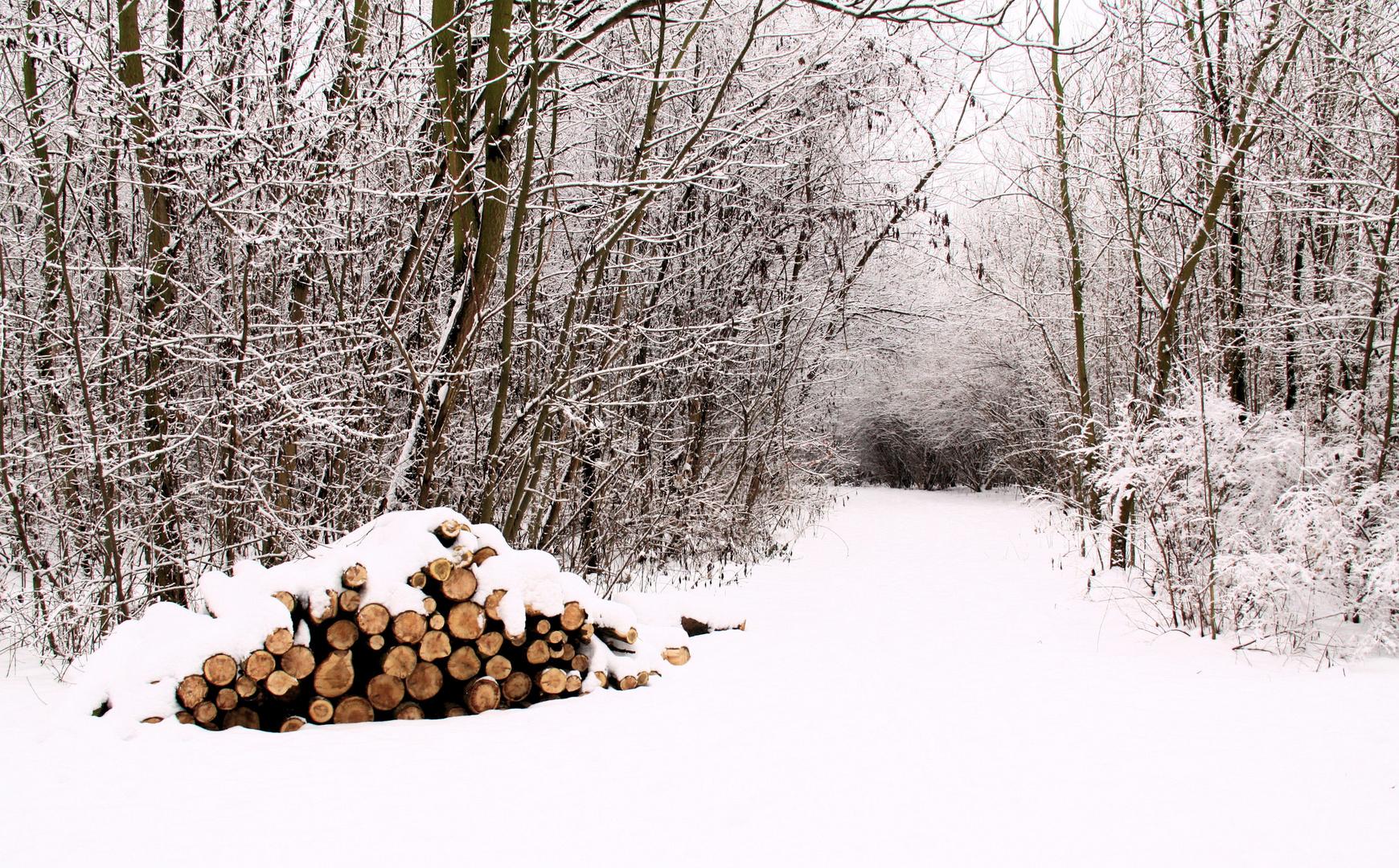 l'hiver sera rude!