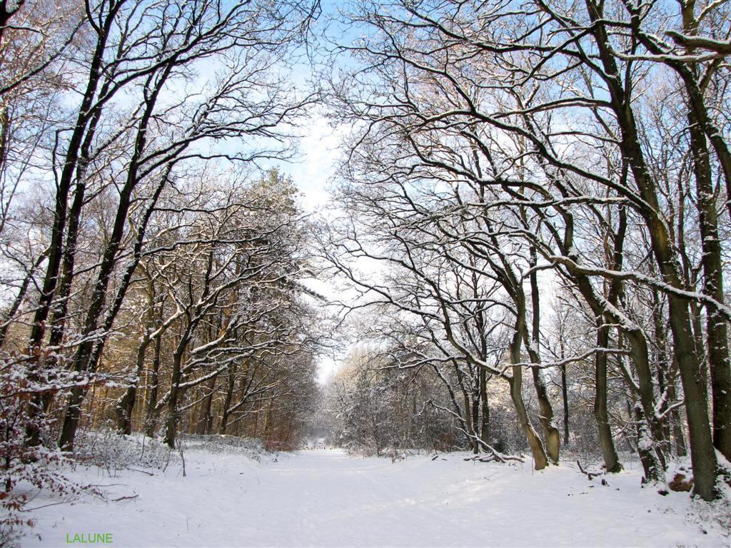 l'hiver.....winter