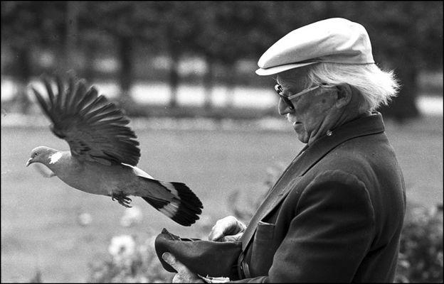 L'homme au pigeon