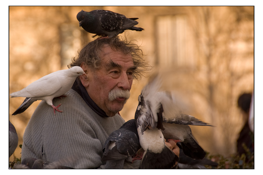 l'homme aux pigeons (III)
