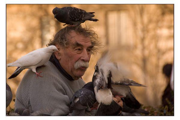 l'homme aux pigeons (III)