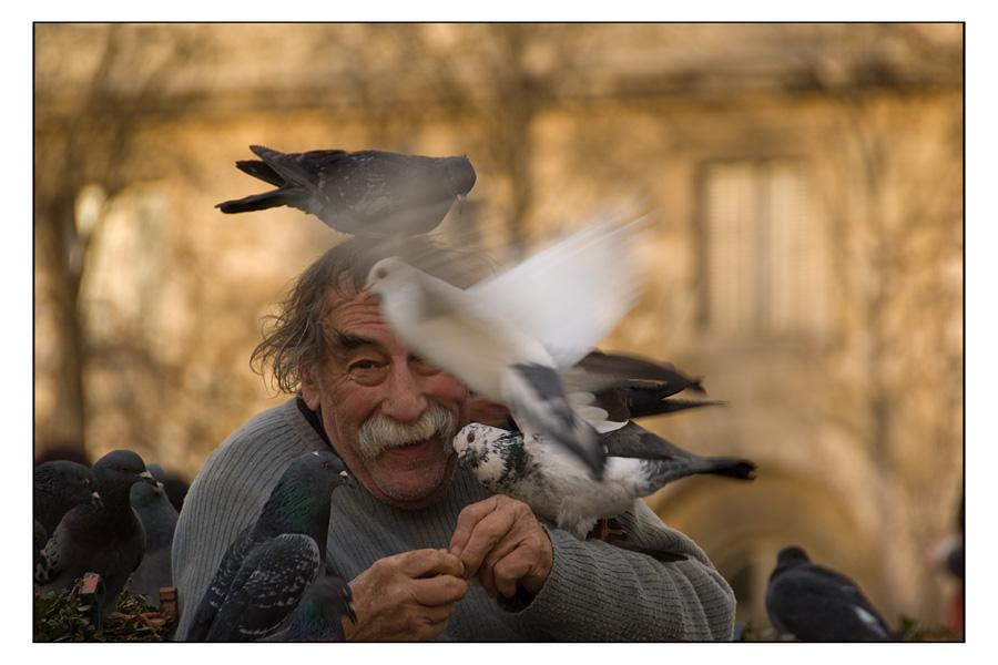 l'homme aux pigeons (IV)