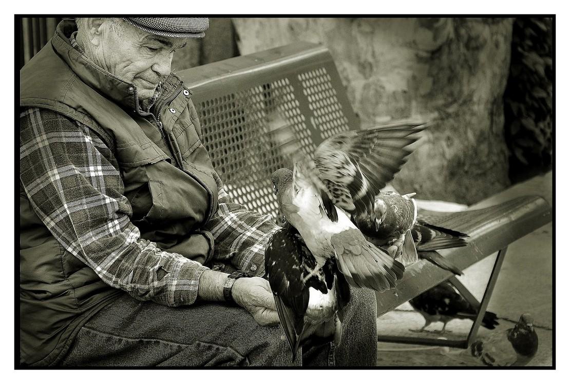 L'homme et les pigeons