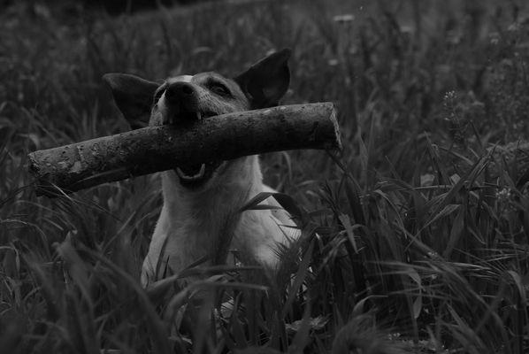 """"""" L'homme naît perfectible, l'animal naît parfait."""""""