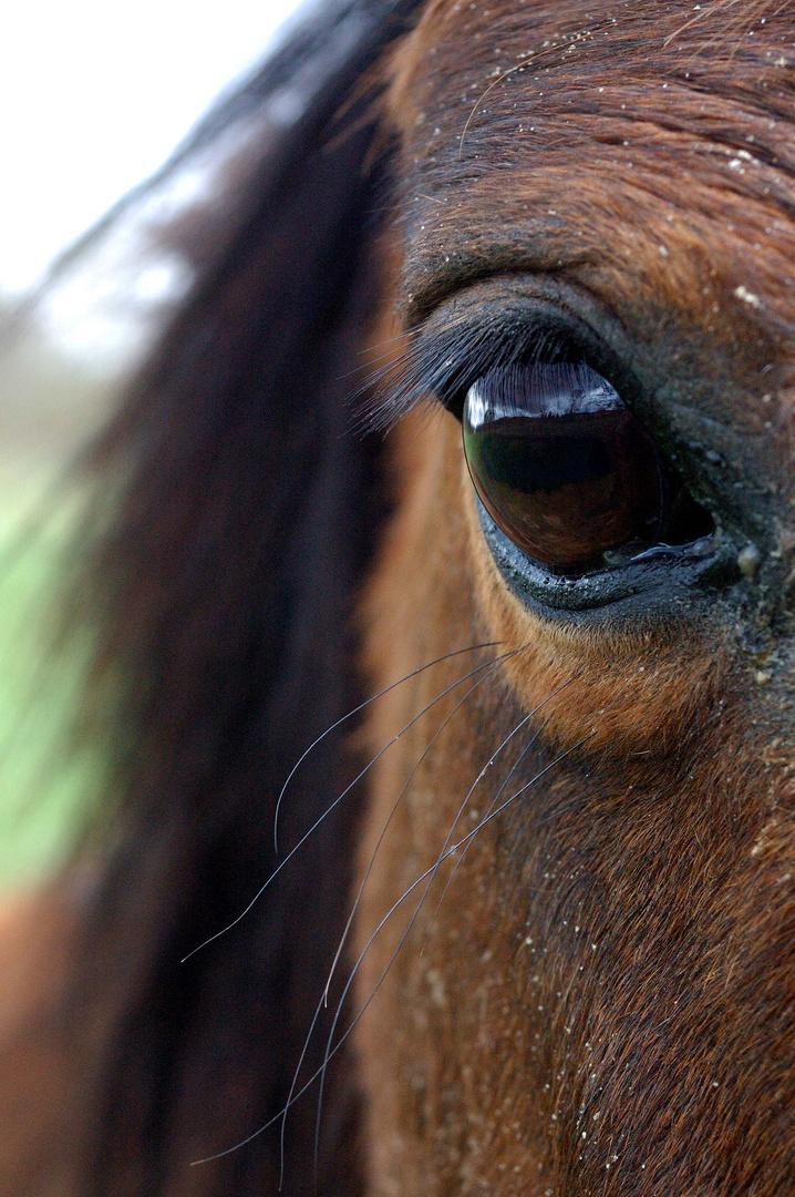 """""""L'homme n'aura jamais la perfection du cheval"""""""