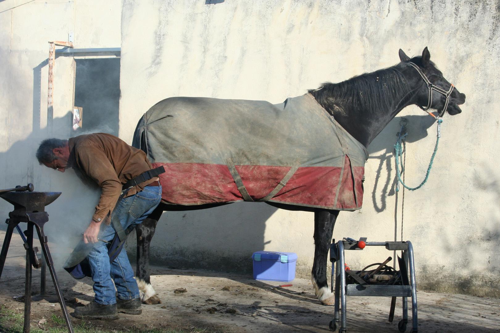 l'homme qui chatouillait les chevaux