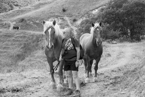 L'homme qui parlait à l'oreille des chevaux
